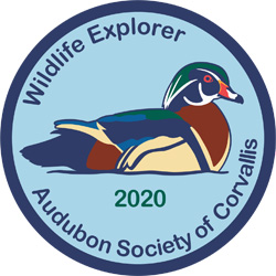 Winter Wildlife Field Day 2020 Ptch