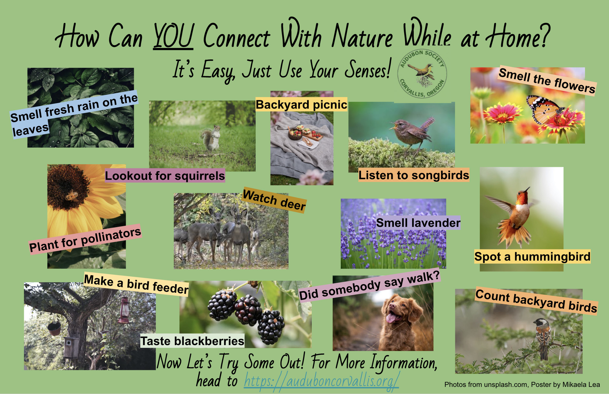 Use your senses to explore nature poster