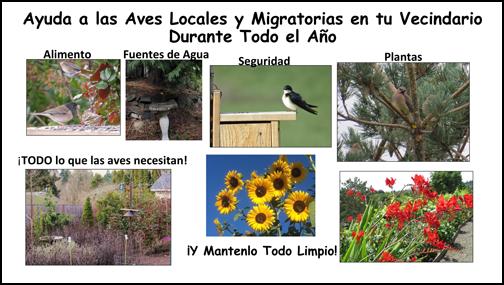 Help Birds Spanish